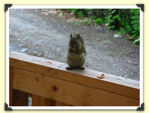 & June 5th: Moving into the cabin | The Legend of the Squirrel